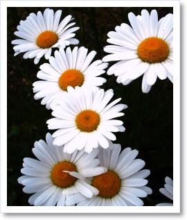 [frame01155748]image[1].jpg