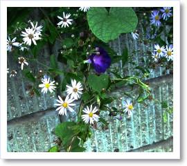 [frame03155669]image[1].jpg