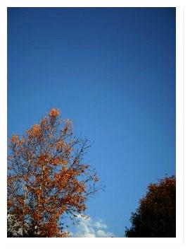 [frame09160941]image[1].jpg