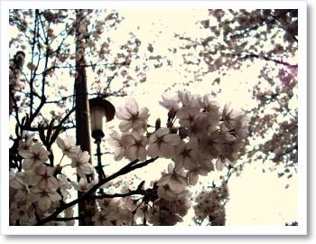 [frame17160188]image[1].jpg