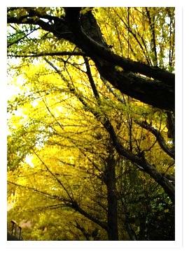 [frame19115251]image[1].jpg