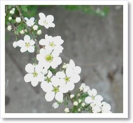 [frame27160964]image[1].jpg