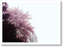 [frame03155869]image[1].jpg