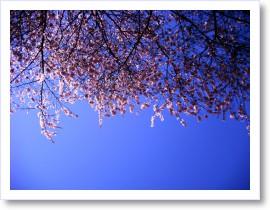 [frame28160289]image[1].jpg